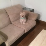 Foster City-Sofa-Pet-Stain-Cleaning
