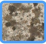 Water-Mold-Removal-Foster City